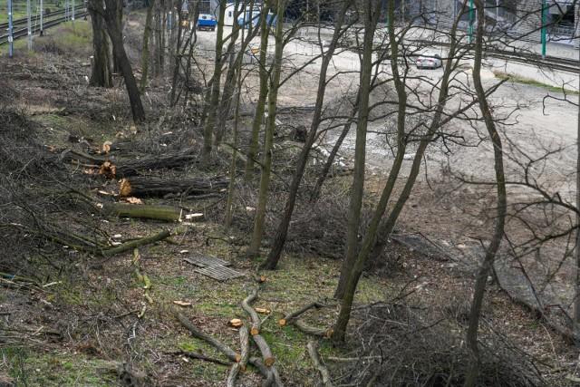 Inicjatywa Zielonego Stołu to pokłosie zaproszenia kierowanego do znanego dziennikarza i przyrodnika - Adama Wajraka - przez prezydenta Poznania, Jacka Jaśkowiaka w związku z wycinką drzew w stolicy Wielkopolski.