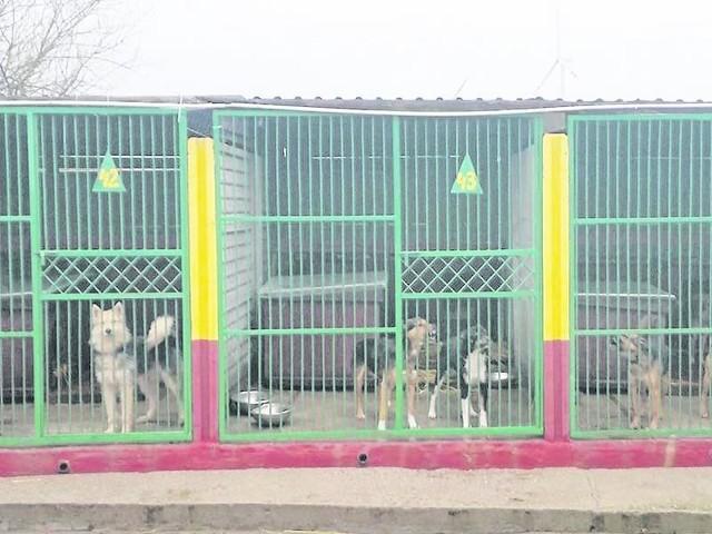 Na zdjęciu istniejące w Białogardzie schronisko dla zwierząt, które należy do Stowarzyszenia Animals. Ale miasto nie może dogadać się z szefem Animalsów, więc planuje budowę własnego