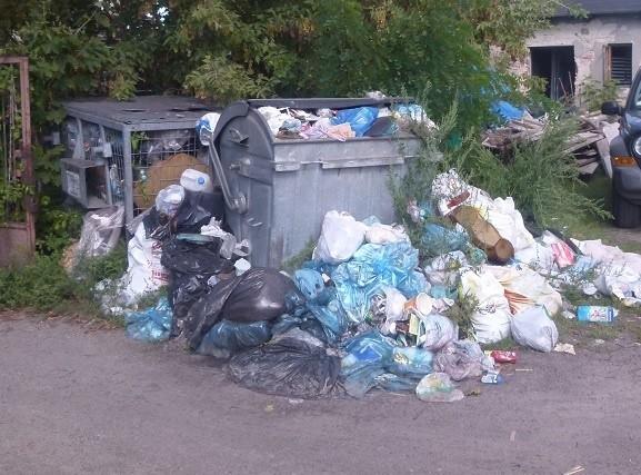 Obecnie każdy łowiczanin za odbiór i zagospodarowanie odpadów segregowanych płaci miesięcznie 15 zł