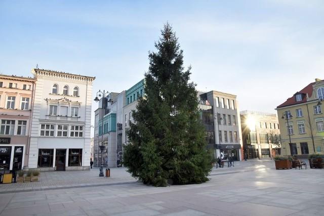 Choinka świąteczna już stoi na Starym Rynku. Lampki bożonarodzeniowe zaświecą się 6 grudnia.