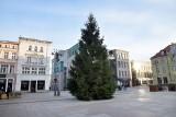 Bożonarodzeniowa choinka stanęła na Starym Rynku w Bydgoszczy! [zdjęcia]