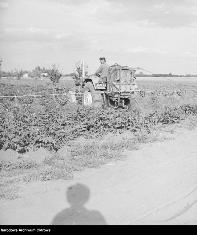 Spółdzielnia Kółek Rolniczych we wsi Sobienie-Jeziory, lata 70.Oprysk ziemniaków przeciwko stonce ciągnikiem Ursus C-330 z opryskiwaczem polowym