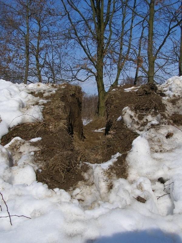 Tak wyglądała wykopana przez nieznanych sprawców dziura w wale w Rudzie (pow. mielecki) w chwili, kiedy zauważyli ją pracownicy PZMiUW.