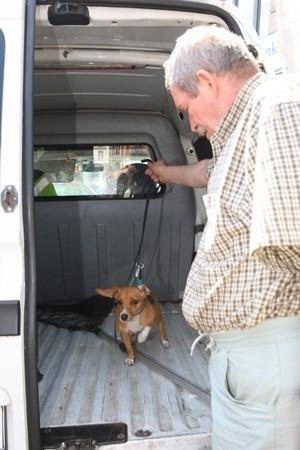 Perełka z pracownikiem schroniska dla bezdomnych zwierząt.