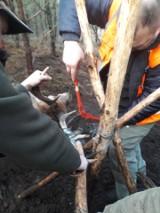 Reanimowali jelenia, który miał atak serca. Zwierzę po godzinie odzyskało przytomność