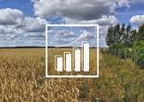 Ceny zbóż i nawozów 2021 - które rosną szybciej? Izba rolnicza analizuje opłacalność produkcji