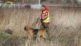 Morderstwo w Parku na Zdrowiu. Zabójcę tropi specjalistycznie wyszkolony pies z Saksonii... Będzie przełom w śledztwie?