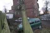 Drzewo runęło na budynek i dwa samochody [ZDJĘCIA]
