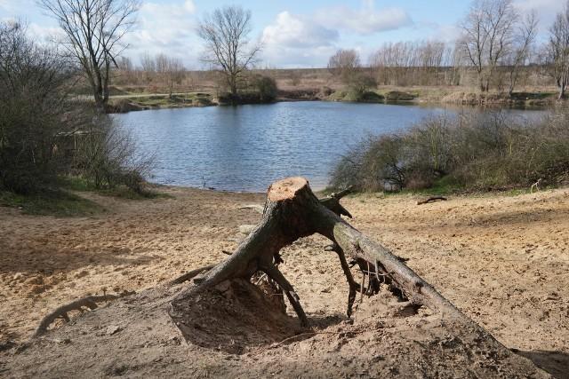 Zakład Lasów Poznańskich wyciął 7 drzew niebezpiecznych rosnących na brzegu skarpy Stawu Młyńskiego nad Różanym Potokiem. Zdaniem mieszkańców skarpa straciła swój urok.