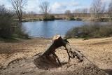 Poznań stracił kolejne drzewa. Wycięto piękne drzewa nad brzegiem Stawu Młyńskiego nad Różanym Potokiem