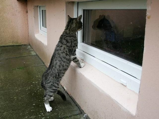 Bezpańskie koty nie mogą się dostać do pomieszczeń piwnicznych. Być może niebawem dostaną własne budki.
