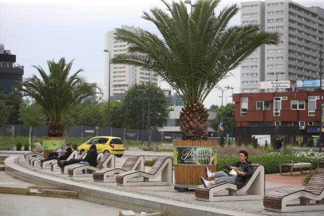 Palmy na rynku w Katowicach