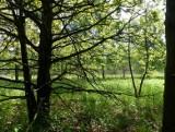 Miasto Łódź sprzeda Zieloną Ostoję deweloperom? Jest decyzja