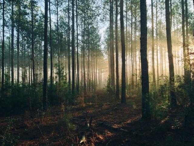 Las może być piękny, ale i tajemniczy. Ma wiele znaczeń, zarówno w snach, jak i na jawie.