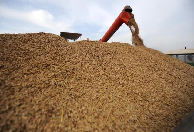 Jakie będą ceny artykułów rolnych w tym roku? Spróbował to przewidzieć Zespół Ekspertów ds. Prognozowania Cen Podstawowych Produktów Rolno-Żywnościowych powołany  przez dyrektora Krajowego Ośrodka Wsparcia Rolnictwa.