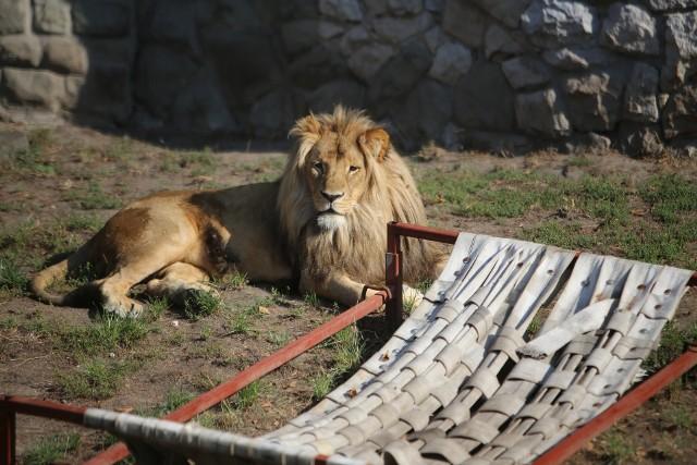 Zwierzaki Śląskiego Ogrodu Zoologicznego