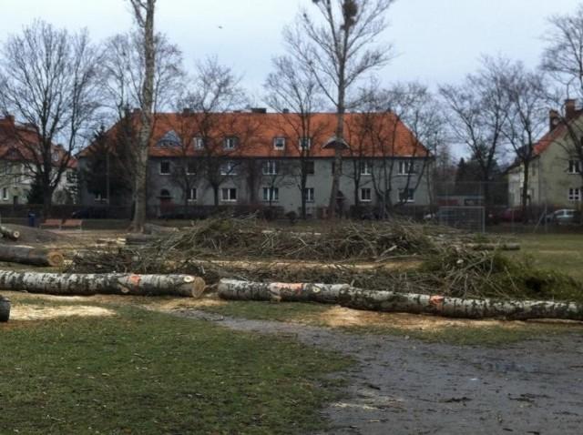Wycinka drzew na Sępolnie