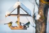 Poradnik. Jak karmić ptaki, by im nie zaszkodzić? Dokarmianie ptaków zimą. Sposoby na dokarmianie ptaków! 19.03.2021
