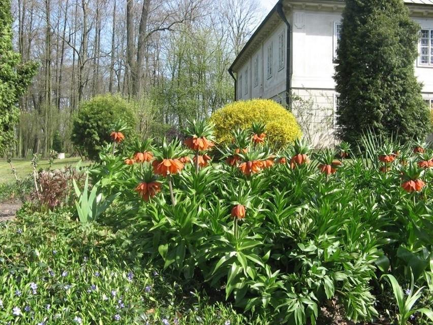 Przepiękna wiosna zawitała do Muzeum Walewskich w Tubądzinie