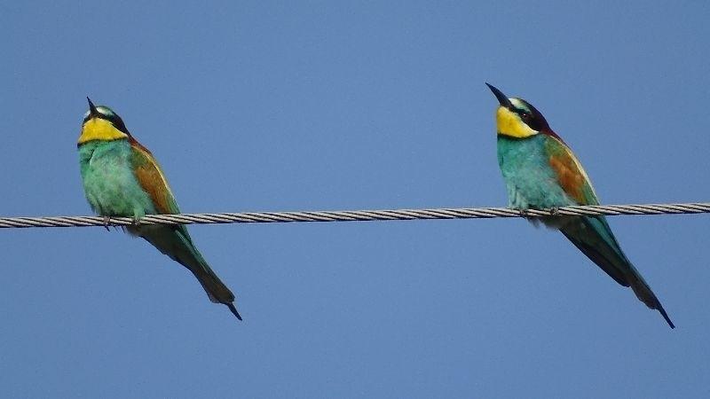 Żołna to niewielki, zaledwie 25-centymetrowy ptak o wielobarwnym umaszczeniu