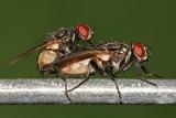 Na takie inteligentne i groźne owady trzeba uważać w swoim domu - zobacz! [lista]