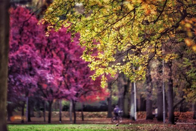 Nasza fotoreporterka Marzena Bugała-Azarko, właśnie wróciła z katowickiego Parku Kościuszki. Zobaczcie, jakie piękne zdjęcia przyniosła! Warto wykorzystać ten październikowy weekend i na własne oczy przekonać się, jakie magiczne uroki ma słoneczna jesień.