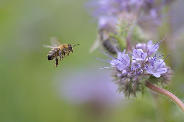 Chrabąszcze, chmary latających mrówek czy roje szerszeni potrafią nieźle przerazić i zamienić lato w prawdziwe piekło.Nie wszystkie owady są groźne dla ludzi i zwierząt. Które owady uprzykrzają nam życie latem? Których z nich należy się obawiać, a które lepiej po prostu zostawić w spokoju?Zobacz w naszej galerii na kolejnych slajdach >>>>>
