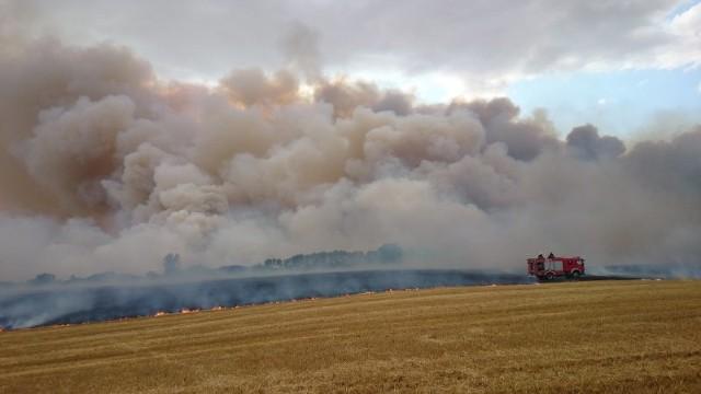 Ogień w miejscowości Wysoka niedaleko Boleszkowic (powiat myśliborski) pojawił się po godzinie 17.