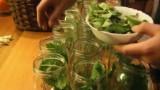 Zobacz, jak przygotować ogórki kiszone? [WIDEO]