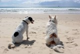 Wakacje z psem nad morzem. Sprawdziliśmy, gdzie możesz przyjechać z pupilem
