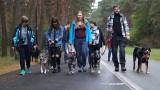 Parada psów adoptowanych w Bydgoszczy [zdjęcia, wideo]