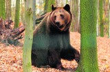 Tatry: świstaki już śpią, ale niedźwiedzie buszują