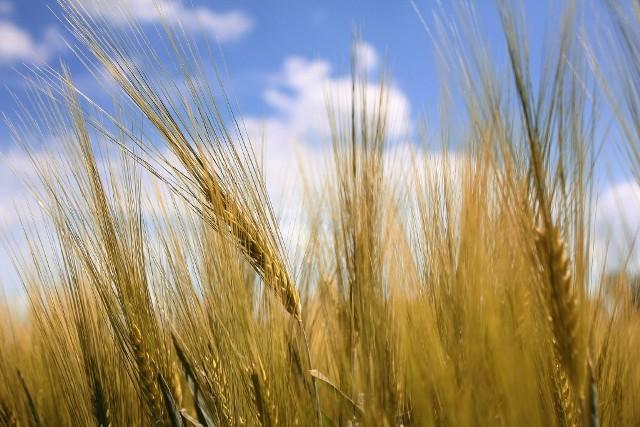 Susza w Wielkopolsce: Rolniku, możesz ubiegać się o kredyt!