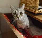 Te koty szukają domu. Franka i Pierzynka do adopcji! [ZDJĘCIA]