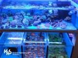 Zatrzymanie transportu koralowców. Część z nich trafiła do wrocławskiego zoo