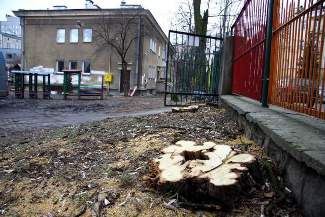 Urzędnicy: - Drzewa wycięto ze względu na bezpieczeństwo