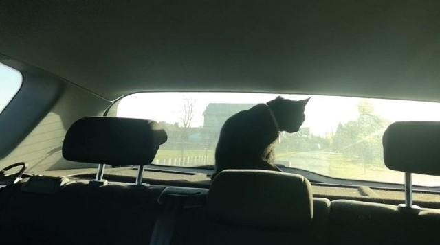 Kot w radiowozie wrocławskiej Policji