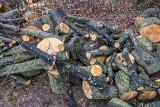 Stuletnie drzewa w parku przy alei Zwycięstwa w Gdańsku wycięte. Sprawa trafiła do prokuratury, a prezydent powoła specjalny komitet