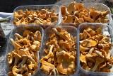 Wysyp grzybów na kieleckich bazarach. Sprawdź, jakie ceny we wtorek, 28 września [ZDJĘCIA]