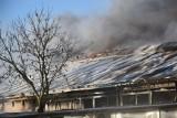 Pożar w budynku firmy Stolmach w Nowym Dworze Gdańskim 1.03.2021 r. Paliła się hala produkcyjna na terenie zakładu [zdjęcia]