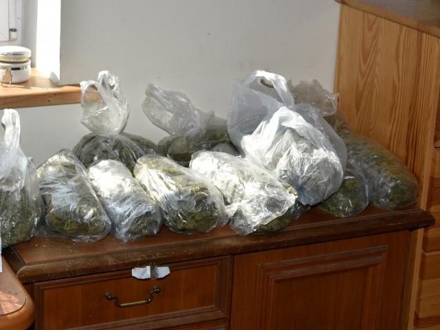 W mieszkaniu mężczyzny policjanci zabezpieczyli 17 krzewów konopi w różnej fazie wzrostu oraz 13 worków z marihuaną, których łączna waga wyniosła 2,6 kilograma.