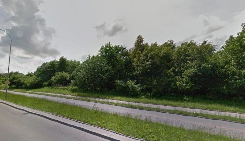 Drzewa wycinane są przy ul. Kołłątaja.