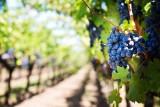 Winiarzu, złóż wniosek o wpis do ewidencji ARR
