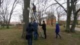 Budki dla sikorek w polickim parku. To wsparcie dla kasztanowców. Zobacz wideo i zdjęcia
