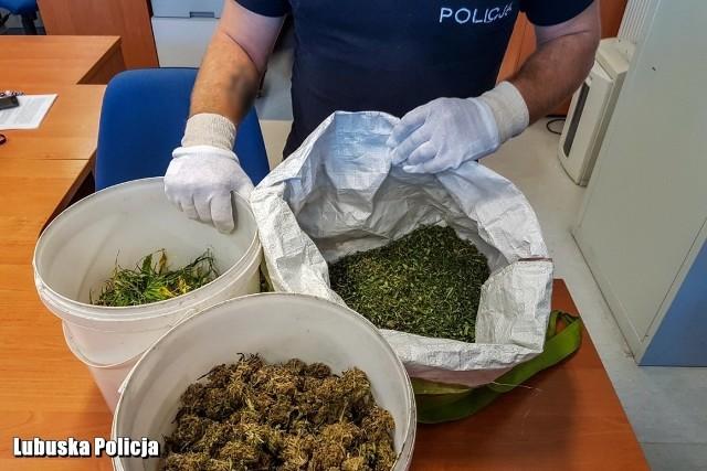 Nowosolscy policjanci zatrzymali 35-letniego mężczyznę, który posiadał blisko 1,2 kg narkotyków. W piątek (21 września) nowosolscy policjanci zatrzymali mieszkańca Nowej Soli, którego podejrzewali o przestępstwo narkotykowe. - Po przeszukaniu mieszkania i pomieszczeń zajmowanych przez mężczyznę, odnaleźli znaczną ilość środków odurzających. Podejrzany przechowywał blisko 1,2 kg marihuany w piwnicy i w pomieszczeniu gospodarczym. Z posiadanego towaru 35-latek otrzymałby blisko 1200 porcji narkotyków - poinformowała st. sierż. Justyna Sęczkowska, rzeczniczka nowosolskiej policji.Diler został zatrzymany i trafił do policyjnego aresztu. Usłyszał już zarzuty za posiadanie znacznej ilości środków odurzających. Mieszkaniec Nowej Soli został tymczasowo aresztowany. Ustawa o przeciwdziałaniu narkomani za tego typu przestępstwo przewiduje karę do 10 lat pozbawienia wolności. Zobacz też: WYMARŁE MIASTECZKO NA SKRAJU LUBUSKIEGO [WIDEO, ZDJĘCIA]