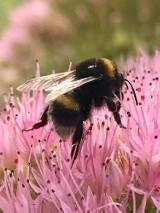 Niezwykłe zdjęcia bytowskiej kwiaciarki. Wstaje rano i foci przyrodę (ZDJĘCIA)