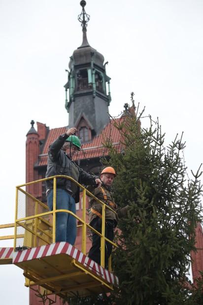 Na Placu Zwycięstwa W Słupsku Stoi Już żywa Choinka Zdjęcia Wideo