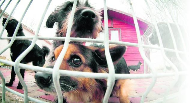 Nasze miasta wydają na utrzymanie schronisk dla psów i opiekę weterynaryjną duże pieniądze