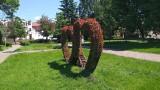 Dywany kwiatowe w Chełmnie. Jak kolorowymi kwiatami ozdobiono miasto? Zdjęcia