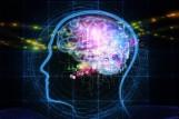 Kobiety mają o 3 lata młodszy mózg niż mężczyźni w tym samym wieku. Przełomowe odkrycie naukowców